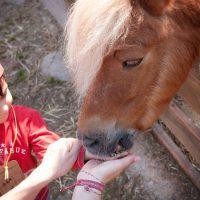 cavall-menjant