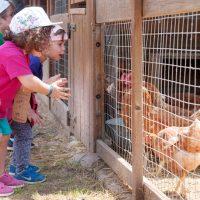 nens-i-gallines