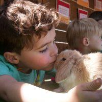 peto-conill
