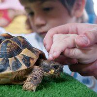 tocant-una-tortuga